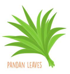 fresh green aromatic pandanus leaf vector image vector image