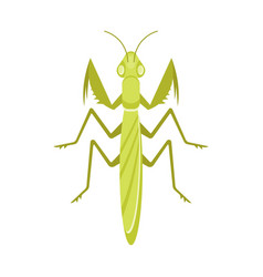 Flat style of mantis vector