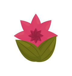 flower petal bud with leaves vector image vector image