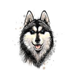 portrait head siberian husky with vector image