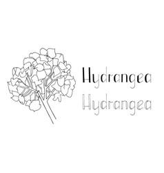 Set hand drawn hydrangea vector