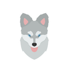muzzle of a husky puppy with his tongue hanging vector image
