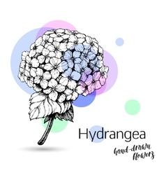Hydrangea flower for wedding or birthday card vector image vector image