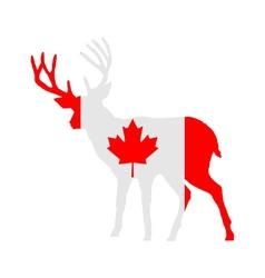 Canadian deer vector