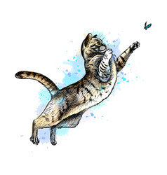 cat playing with a butterfly from a splash of vector image