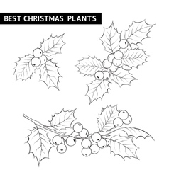 Christmas mistletoe branch drawing vector