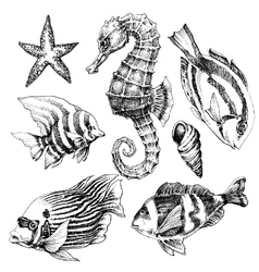 Fish sea horse marine life hand drawn set Sea life vector image