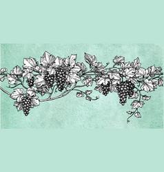 hand drawn of grapes vector image