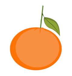 isolated tangerine vector image