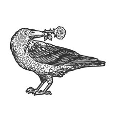 raven with rose in beak sketch vector image