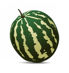 Ripe Watermelon on white background vector