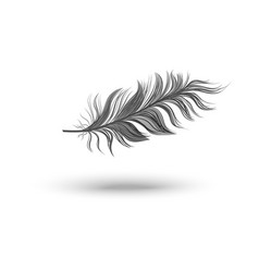 single fluffy black feather falling or hovering on vector image