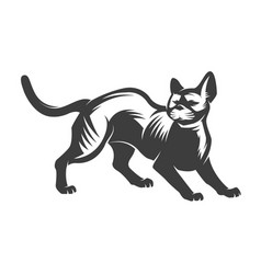 cat isolated on white backgroun vector image vector image