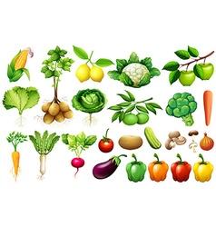 Various kind of vegetables vector image