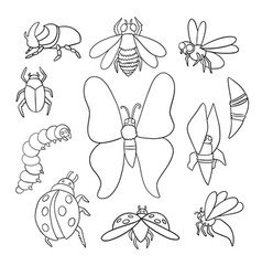 A set different insects outlines vector