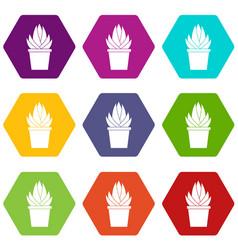 Aloe vera plant icon set color hexahedron vector