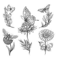 Butterfly and flowers doodle sketch icons vector