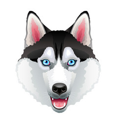 husky dog portrait isolated on white vector image