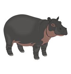 hippopotamus or hippopotamus amphibius vector image