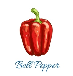 Bell pepper vegetable isolated sketch icon vector image