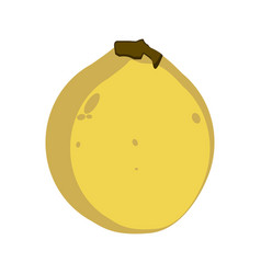 isolated guava vector image