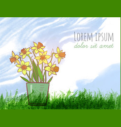 bouquet of yellow daffodiles green grass and blue vector image