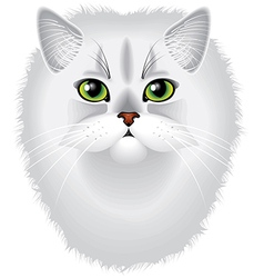 cat chinchilla vector image