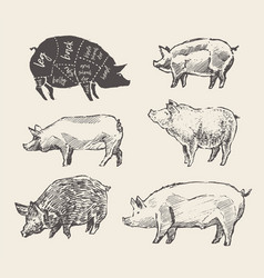 drawn pigs mangalica pork restaurant menu vector image