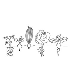 family vegetables growing in a garden vector image