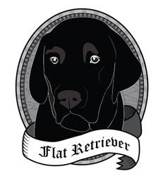 Flat Retriever Portrait Isolated dog vector image