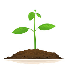 one growing green plant vector image