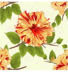 seamless texture flowers tropical yellow hibiscus vector image