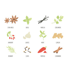 Spices hand drawn herbs and spices star anise vector