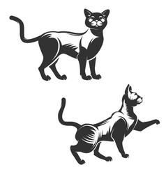 set of cat isolated on white background vector image