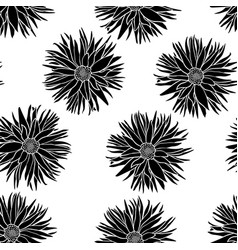 dahlias flowers pattern seamless vector image