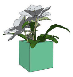 flowers in a pot on white background vector image