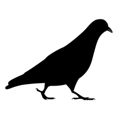 Going black pigeon silhouette vector image