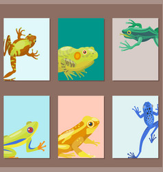 frog cartoon tropical animal cartoon nature cards vector image vector image