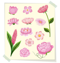 different types of pink flowers vector image vector image