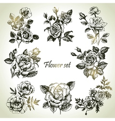 Floral set hand drawn of roses vector image vector image