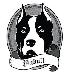 Pitbull Portrait Isolated dog vector image