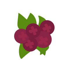 Cranberries isolated purple berries image flat vector