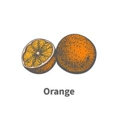 Hand-drawn ripe juicy orange cut piece half vector