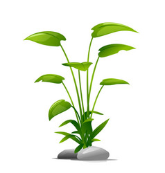 high plant with stones isolated decoration vector image