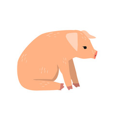 little funny pig sitting on the floor side view vector image
