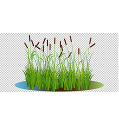 Reed bushes in swamp vector