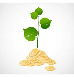 Coins and plant vector