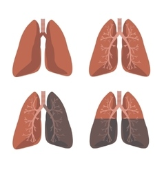 Human Lung Anatomy Set vector image
