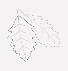 oak leaf icon line element of vector image