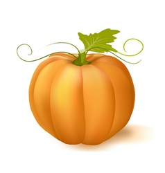 pumpkin with leaf vector image